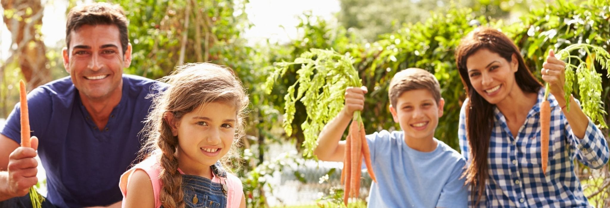 family of 4 picking carrots from garden